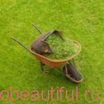 適切な芝生の手入れ – 芝生の手入れ秋